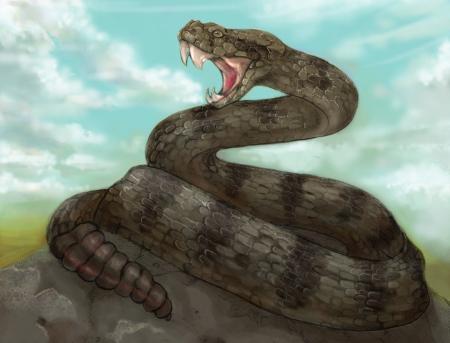 ねー か じゃ コブラ